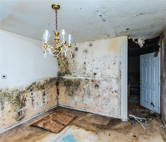 Preventing Mold In Your Rental Home 3 Effective